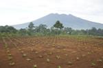 Lowongan PT Mahameru Aksara Agri